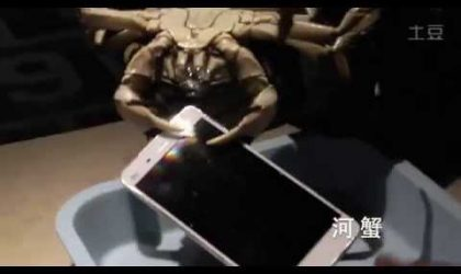 Xiaomi does creepy durability test, gives chance to Crabs and Lobsters to break its Mi4