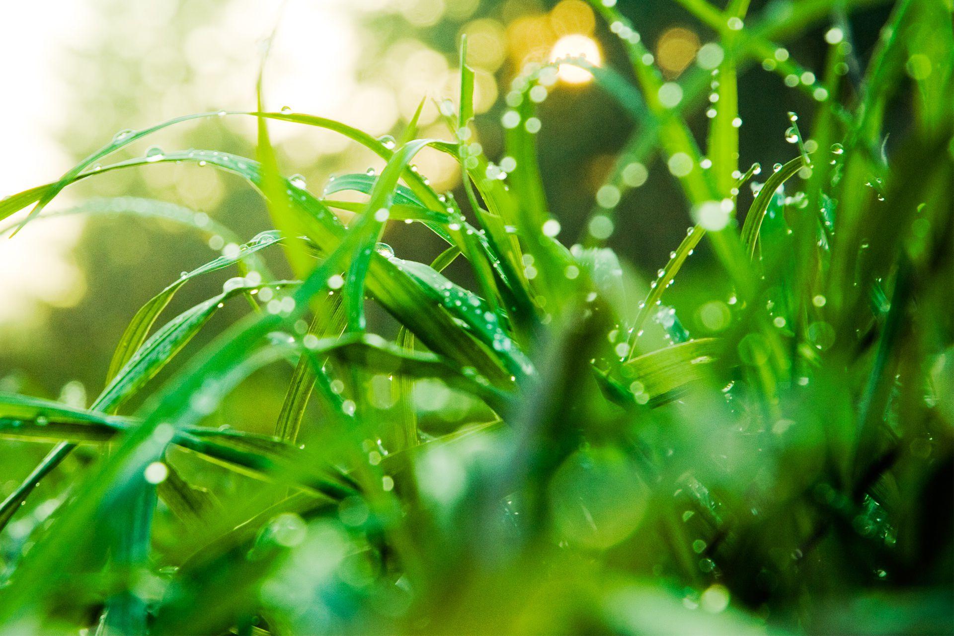bladesplusdroplets