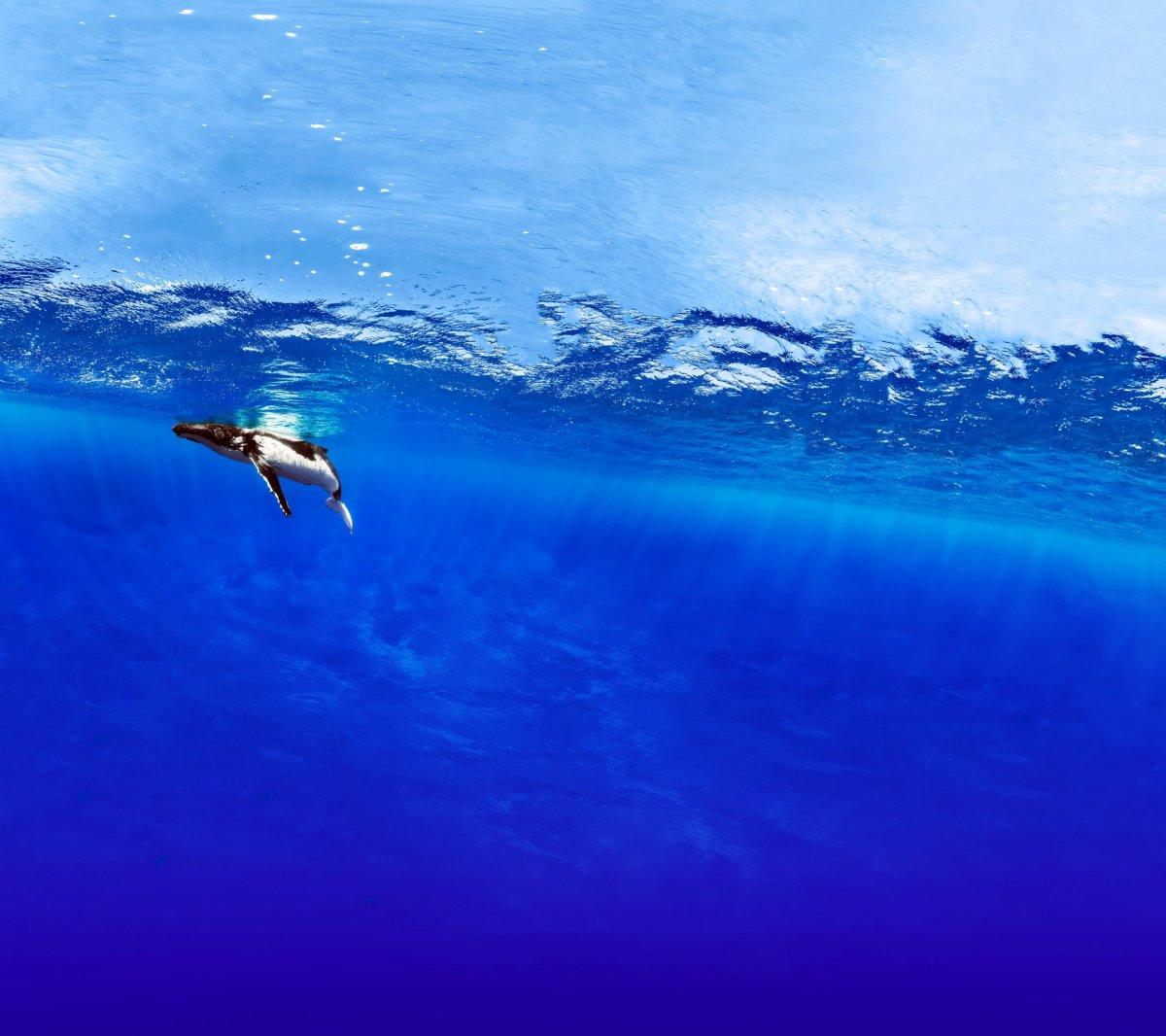 Download Pixel 2 Wallpaper (Keep Looking, Underwater