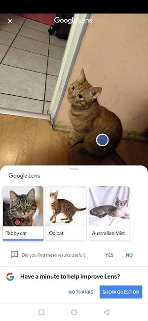 Google-Photos-Lens